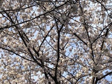春ですね(^^)